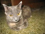 Лаура - почти египетская царица