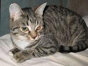 Очередная грустная история невинной кошки