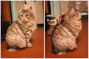 Своенравная кошка Рыся ищет хозяина!