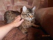 Кошки-мышеловки в хорошие руки