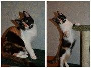 Отдам котёночка в добрые руки!